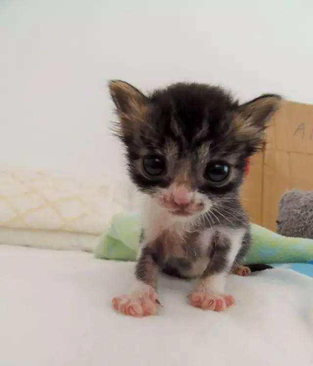 在竹林里发现了一只小幼猫在哭泣