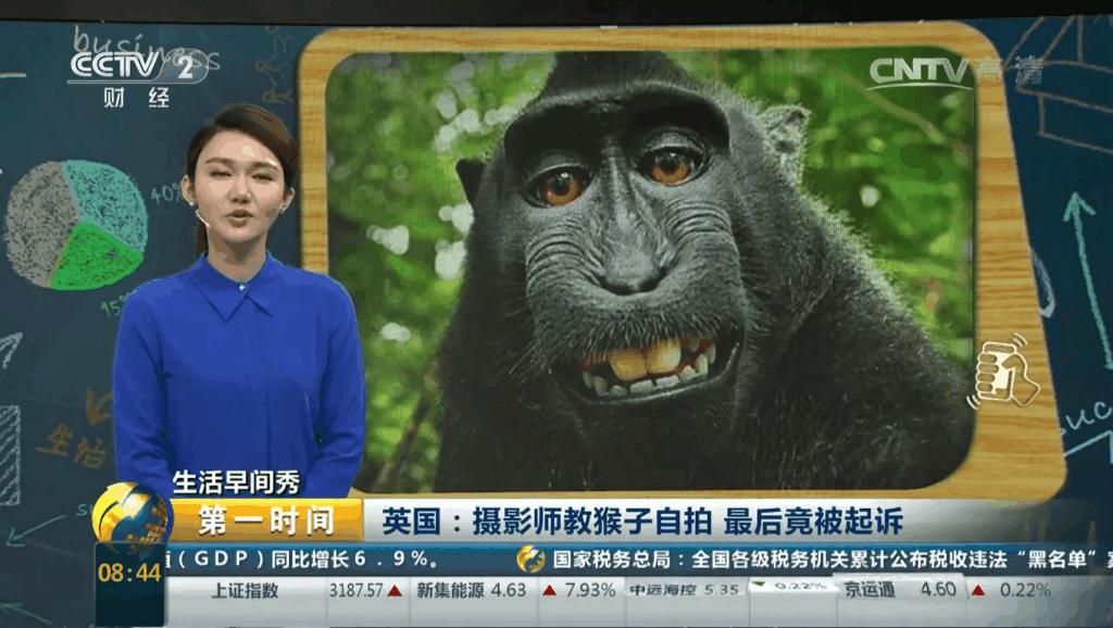 英国摄影师被起诉侵犯猴子的肖像权
