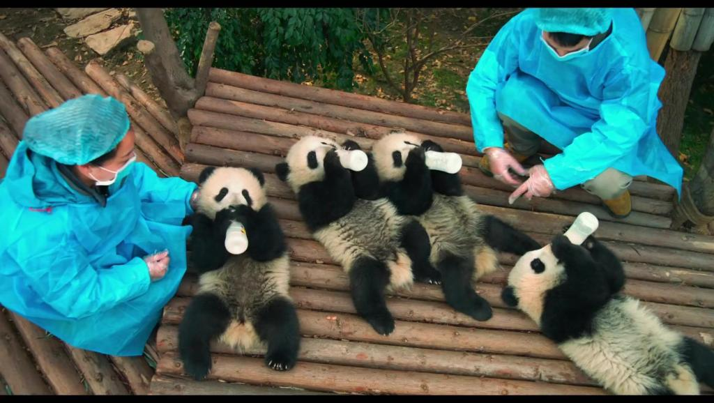 打开 打开 动物世界纪录片 十二场猛兽大对决,6分50秒一只黑熊直立