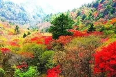 微信头像风景山林