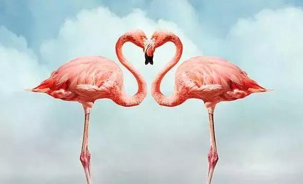 自游港空中动物小镇loving u! 你与火烈鸟有个爱的约定!