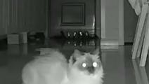 原来猫咪大晚上不睡觉 竟然独自卖萌