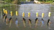 牛!农村姑娘用5个塑料瓶制成的无人自动钓鱼系统,鱼儿纷纷咬钩