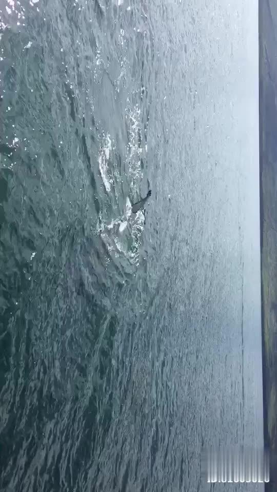 冰岛 Dalvik观鲸 能否看到鲸鱼完全凭运气 我们那天运气还真是不错 @抖音小助手