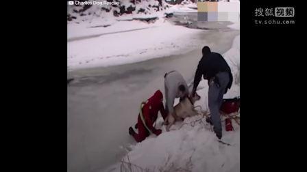 超感人: 汪星人掉进冰河里,众人施救!