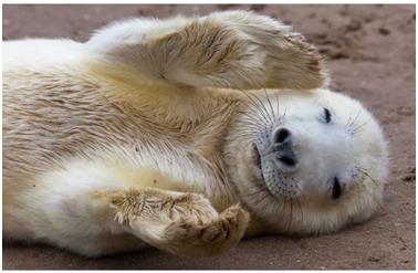 盘点: 英国最奇妙的10种野生动物