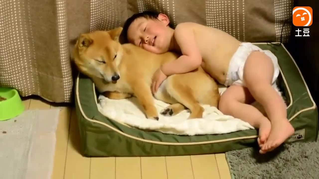 宝宝有床不睡, 非要和狗狗睡窝窝