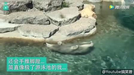 北极熊在泳池里玩仰泳 悠闲地样子像不像玩水的自己