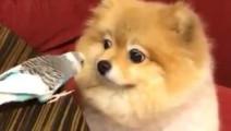 可爱狗狗和鸟儿玩耍,一对萌货