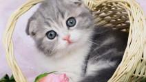 俄罗斯马戏不亏世界第一,能训猫,不服来战