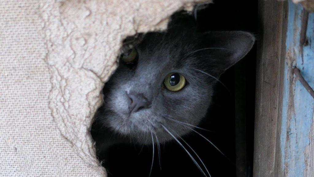 胆小鬼流浪猫老躲在地下室里谁给你好吃的