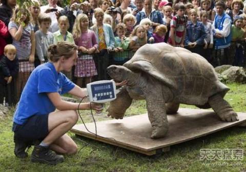 世界最大的动物 刷新你的三观