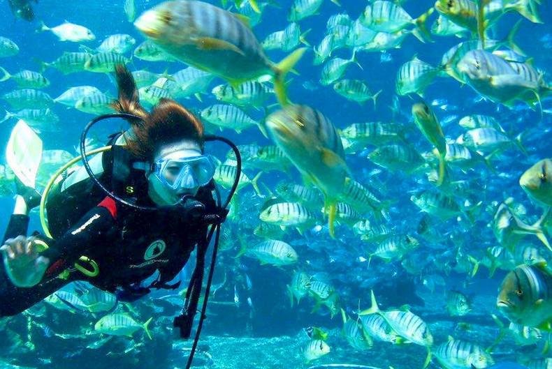 壁纸 海底 海底世界 海洋馆 水族馆 桌面 790_529