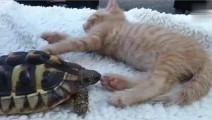乌龟把猫咪的脚当成食物,这一口下去小喵都怀疑人生了