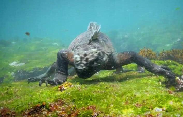 海底遇到狰狞猛兽,游客初度见都被吓到,可谓哥斯拉原型