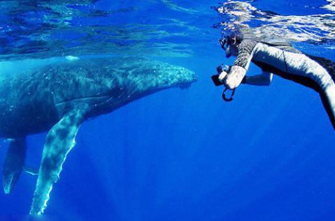 壁纸 动物 海洋动物 鲸鱼 桌面 479_317