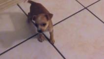倔强的狗宝宝被主人故意锁在房间 坚持不懈后还是逃了出来