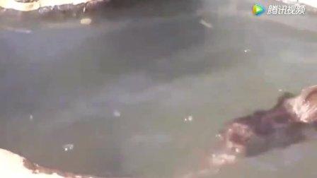 小猴子在水边玩水, 下一秒猴子坠到水里面去了