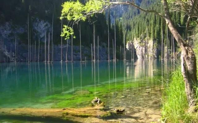 阿拉木图水下森林分享展示