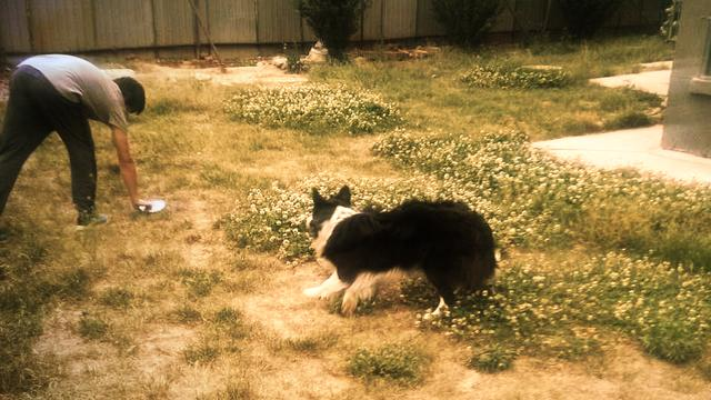 喜欢宠物的朋友们,看狗狗表演接飞盘