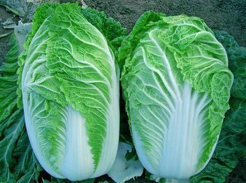 """冬天白菜和它一起吃, """"人参""""都比不上, 甩掉一身脂肪"""