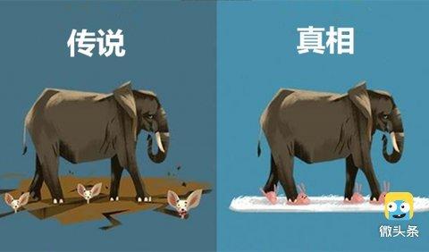关于动物的12个冷知识, 再也不要把传说当真了!