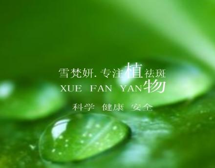 背景 壁纸 绿色 绿叶 树叶 植物 桌面 440_344