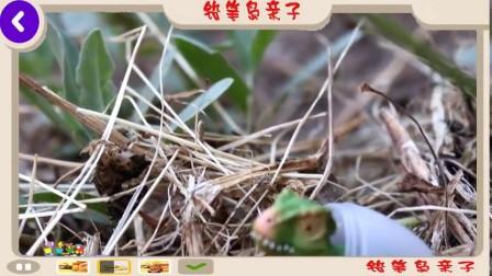 史前公园霸王龙图片