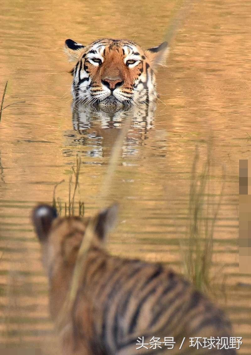 但小老虎显然对洗澡不感兴趣,它开心地玩起水来.