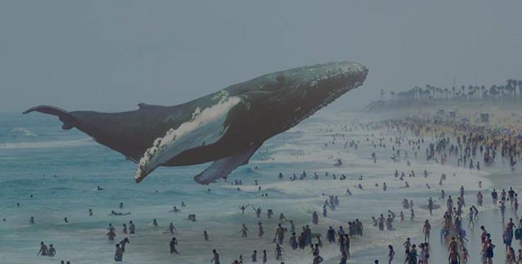 影子海洋动物大全