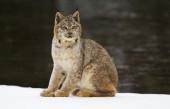 动物世界: 这些未必叫得上名字的猫科动物, 都充满着野性的神秘气息