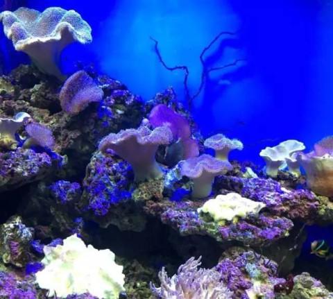 壁纸 海底 海底世界 海洋馆 水族馆 480_431