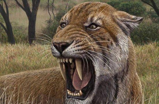 史前最大的猫科性动物: 剑齿虎