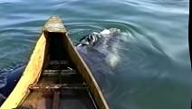 渔民在海中拍到神秘生物,注意观看这个生物头部抬出水面瞬间