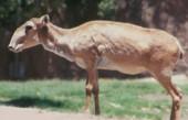 中国5种被人类猎食的物种, 其中2种已被吃成灭绝