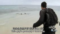 贝爷龙虾肉吃的不过瘾啊,打算抓鲨鱼解解馋!
