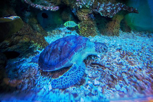 三亚性价比最高的海底餐厅, 你绝对不能错过!