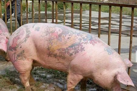 见过那么多猪还是你最可爱