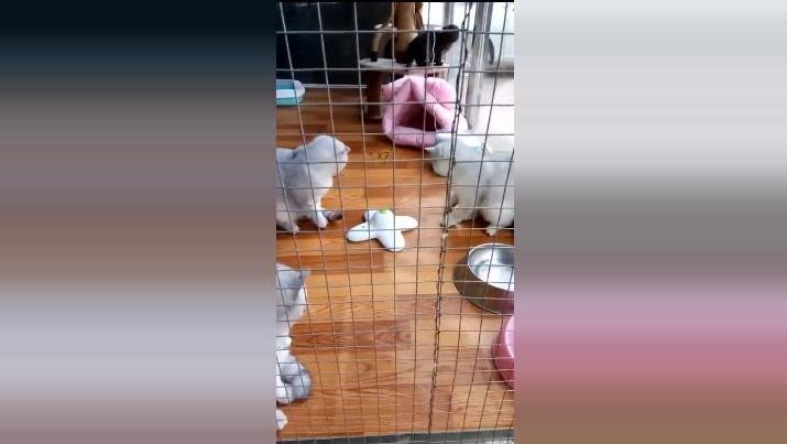 小猫扑蝴蝶 铲屎官们的宠物玩具神器