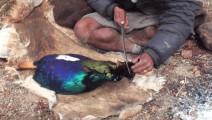 喜马拉雅山下牧民如何捕猎和生活的?