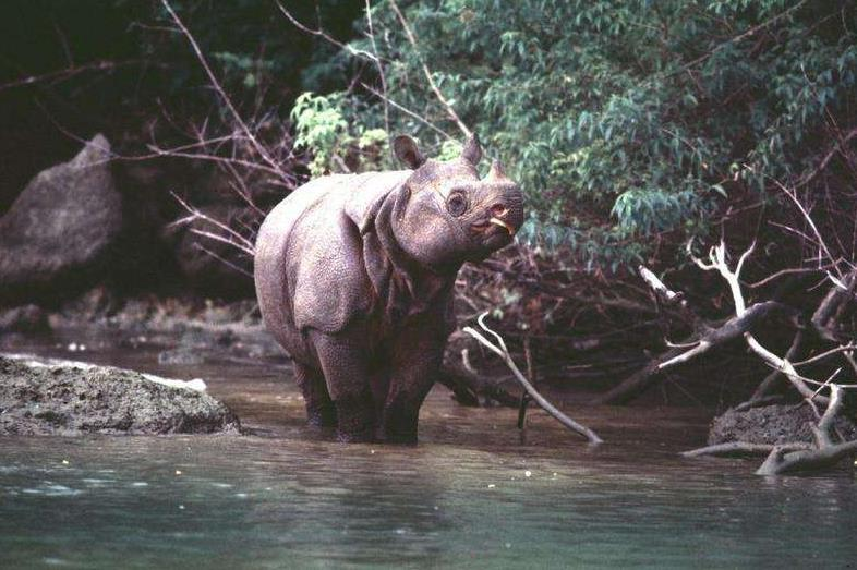 5种极度濒危的动物, 第3种在中国已被吃到灭绝
