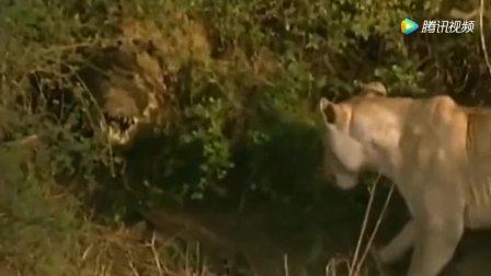 超凶残的动物世界, 狮子鬣狗谁能成为霸主呢