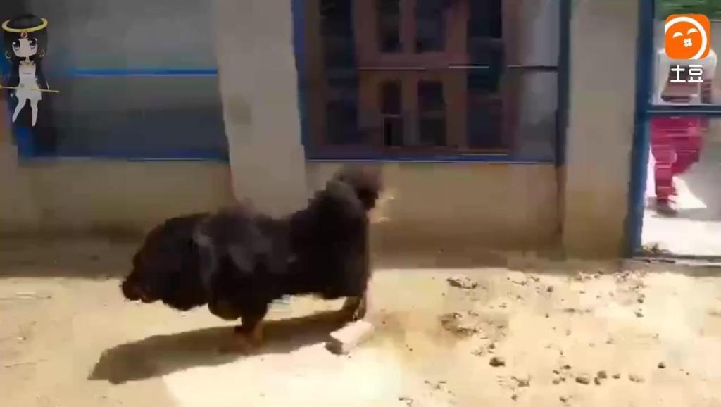 警察绝不选这些狗当警犬,其中1个因太聪明,但哈士奇理由超奇葩