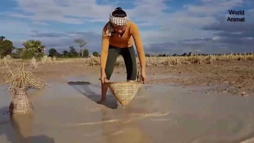 柬埔寨美姐舀鱼误闯蛇窝,捉到几十条大水蛇
