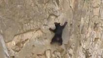 太牛了吧!小熊,你咋不上天呢!从小就是攀岩好手呀