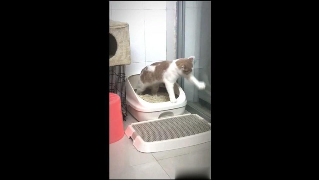 养一只非常非常洁癖的猫是一种什么体验?它为什么在墙上抓来抓去的?