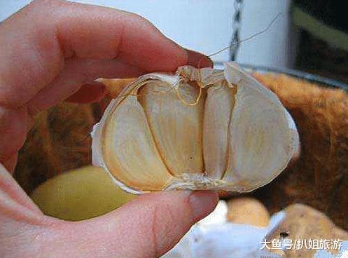 """世界上钟爱""""大蒜""""的国家:每年消耗8000吨,人均寿命很意外"""