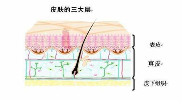 为什么做手术时, 切开的皮肤不流血?