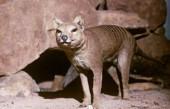 盘点7种憨态可掬的物种, 最后一种在2011年被宣布灭绝