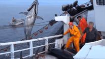 上千米的大网下海捕鱼,这场面实在太壮观了!